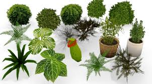 پاورپوینت گروه بندی گیاهان زراعی